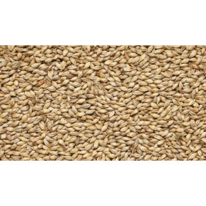 Cara Pale, (7-10 EBC) Viking malt ФинляндияЯчменный солод Cara Pale, (7-10 EBC) Viking malt Финляндия